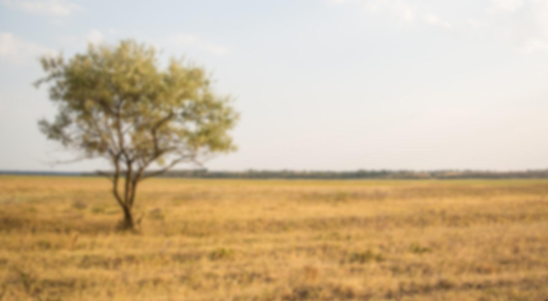 Giraffe/Okapi Keeper Chat background