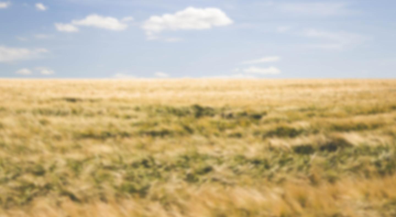 Farmyard Keeper Chat background