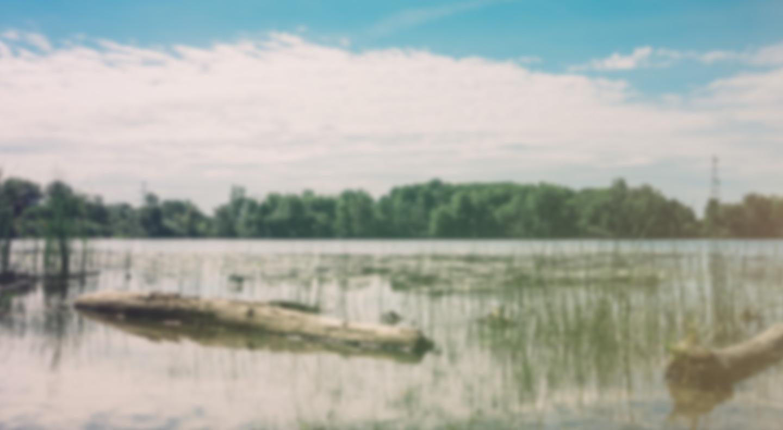 Marsh Aviary Keeper Chat background