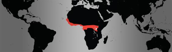 chimp map
