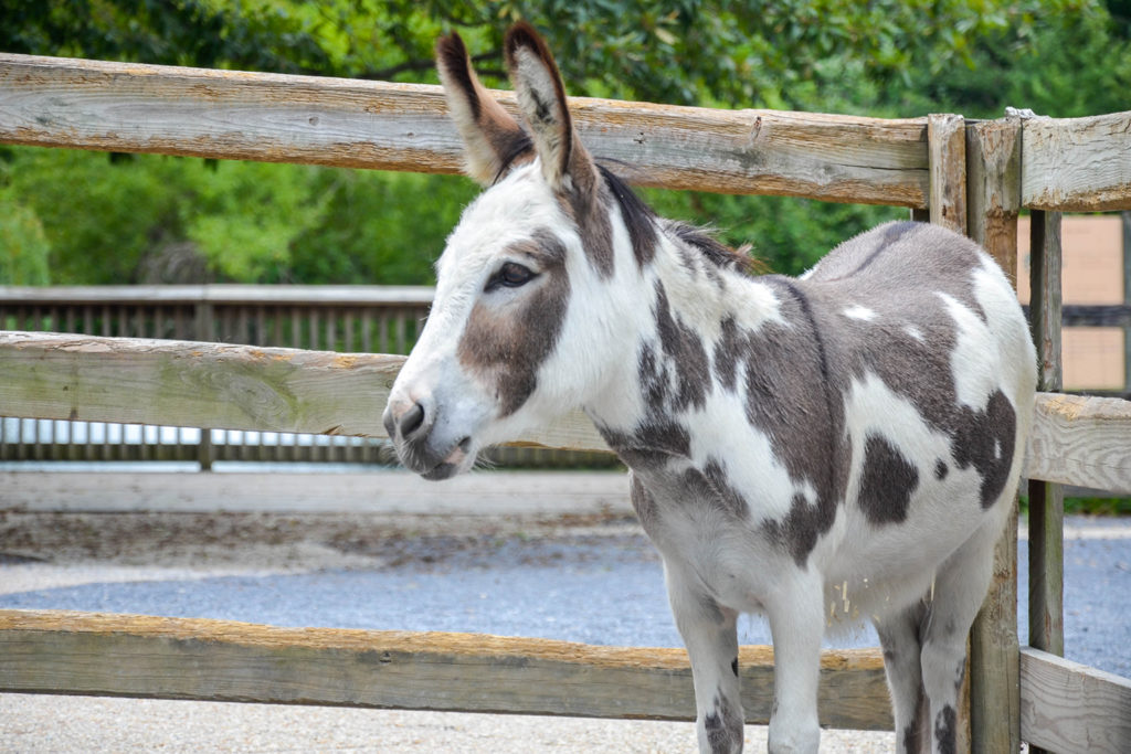 donkey background