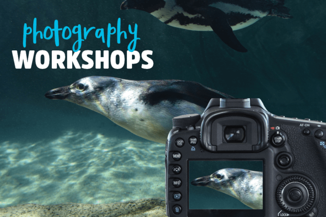 Photography Workshop image