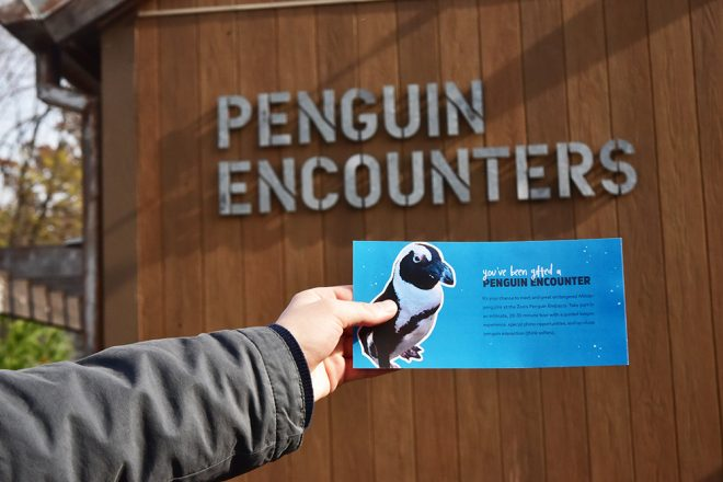 Penguin Encounters as Gifts image