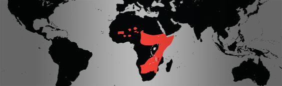 cheetah map