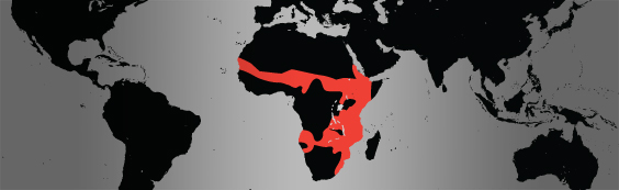 common warthog map