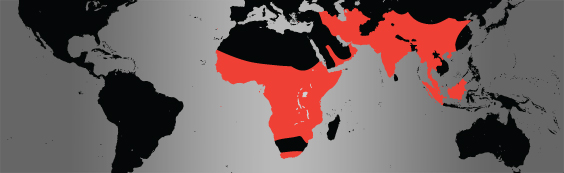 leopard map