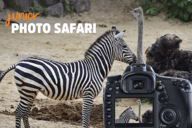 Junior Photo Safari image