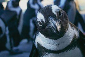 Penguin Encounters image